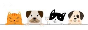 Абсолют Страхование помогает кошкам и собакам найти дом